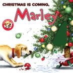 marley-christmas-is-coming-marley