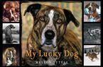 my-lucky-dog