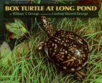 box-turtle-at-long-pond