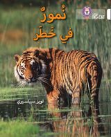 Tigers in Danger: Level 10 (Collins Big Cat Arabic Reading Programme)
