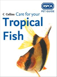 care-for-your-tropical-fish-rspca-pet-guide