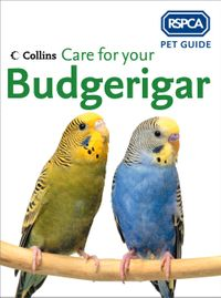 care-for-your-budgerigar-rspca-pet-guide