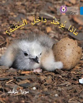 What's in the Egg?: Level 4 (Collins Big Cat Arabic Reading Programme)
