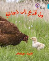 Chick to Hen: Level 7 (Collins Big Cat Arabic Reading Programme)