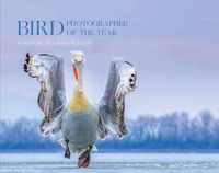 bird-photographer-of-the-year-collection-4-bird-photographer-of-the-year