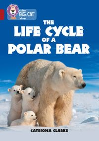 the-life-cycle-of-a-polar-bear-band-14ruby-collins-big-cat