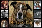 my-lucky-dog
