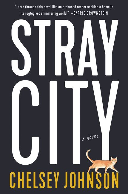 Image result for stray city chelsey johnson