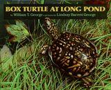 Box Turtle at Long Pond