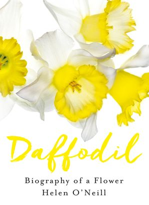 Daffodil Hardcover  by