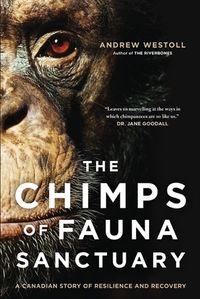 chimps-of-fauna-sanctuary