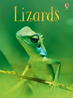Lizards Hardcover  by James Maclaine