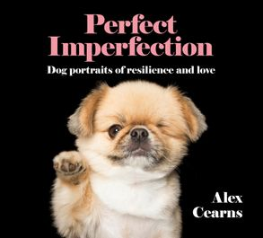 Cover image - Perfect Imperfection: Dog Portraits Of Resilience And Love