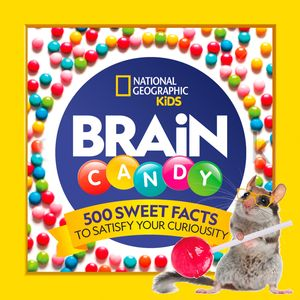 Picture of Brain Candy: 500 Sweet Facts to Satisfy Your Curiosity