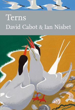 Terns Hardcover  by David Cabot