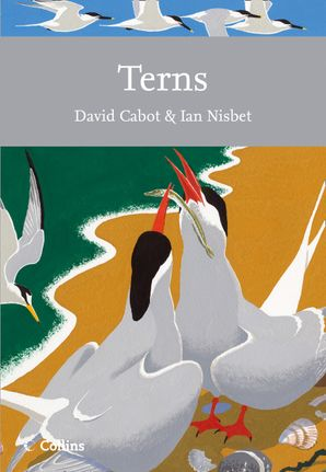 Terns Paperback  by David Cabot
