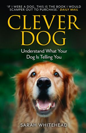 clever-dog