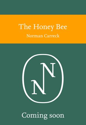 The Honey Bee Paperback  by Norman Carreck