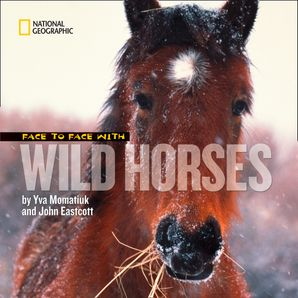 Face to Face with Wild Horses (Face to Face ) Hardcover  by Yva Momatiuk