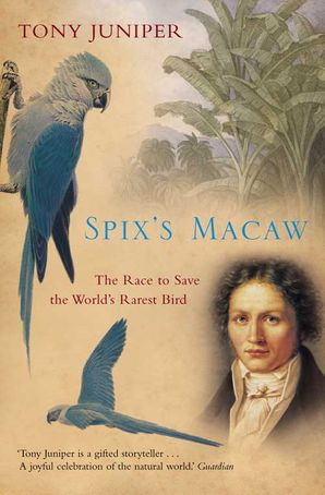 Spix's Macaw Paperback  by Tony Juniper